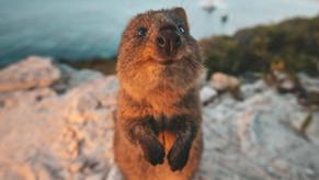 ¿Cuál es el animal más feliz del mundo?