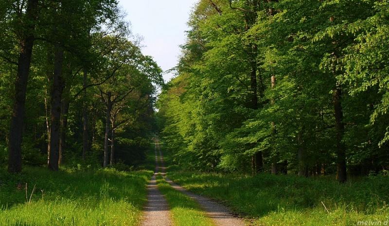 Forêt Domaniale de Mormal