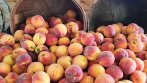 Peach Pie (desserts)