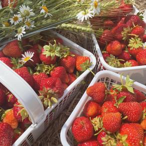 Strawberry Picking @ Downey's Farm