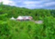 vineyard view.jpg