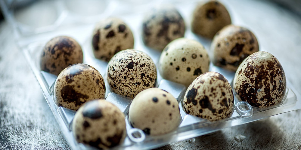 All you need to know about Quail Eggs