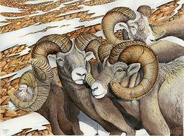 South Slope Big Horns