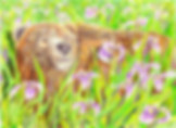 Ursus Iris