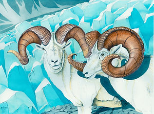 Icefall Rams