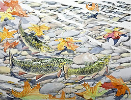 Brook Trout in Fall