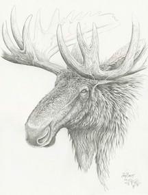 Moose Study
