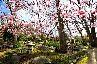 Japanese Garden No Signature IMG_4681 Ed