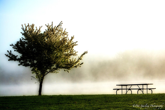 Tree at the Rock River.jpg