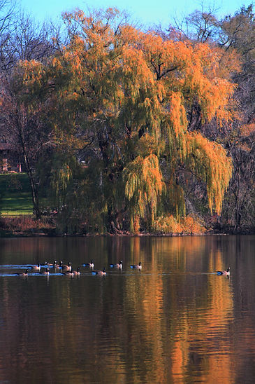 Autumn by David Abb.jpg