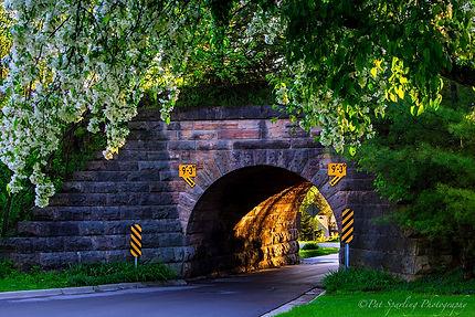 Pat Sparling tunnel.jpg