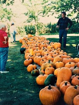 Nancy's pumpkins