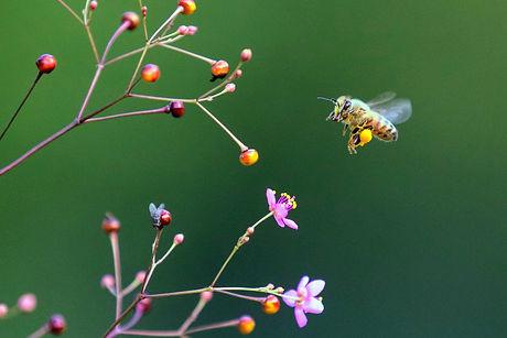 Bee No Signature IMG_8683.jpg
