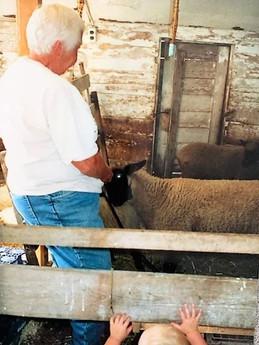 Nancy showing her grandchild the sheep