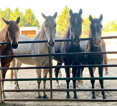 Mustangs at Gate (2).jpg