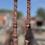 Thumbnail: Zuilen met klimmende klimop met kopstuk