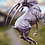 Thumbnail: Stijgerende Antilope