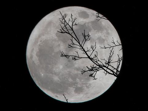 מדוע הירח מקיף את כדור הארץ?