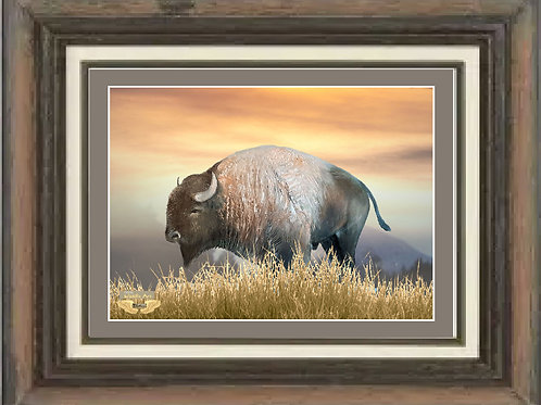Lone Bison 20 x 16