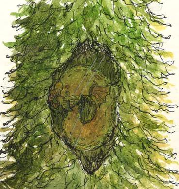 Horned Slug (Explorers Journal)