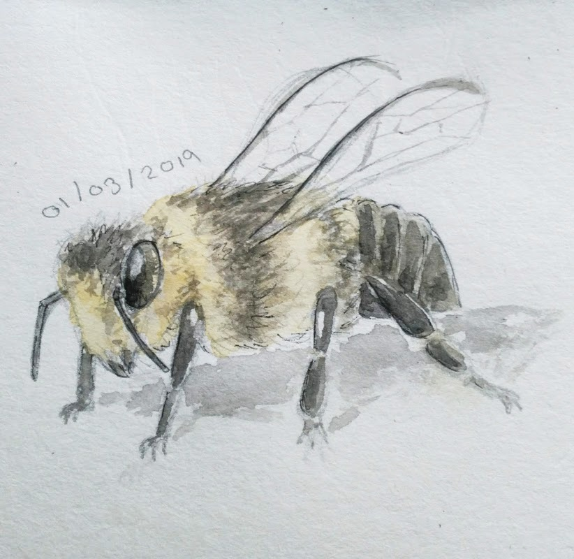 Watercolour Bee_edited.jpg