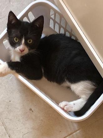 Kitten in laundry basket.jpg