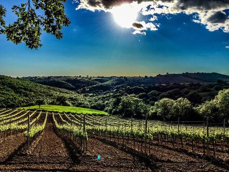 Pannelli solari organici, a Vinitaly la cella fv che viene dall'uva