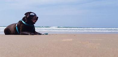 labrador soleil plage.jpg