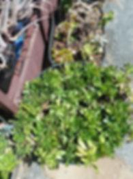 Dorothy Garden Image.jpg