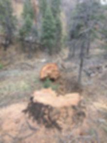 SBMLT Tree Image.jpg