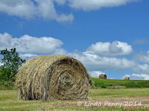 """Hay """"Barrel"""" Notecard"""