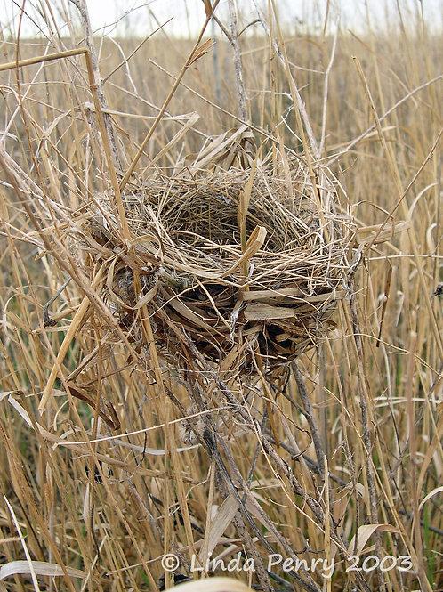 Empty Nest Notecard
