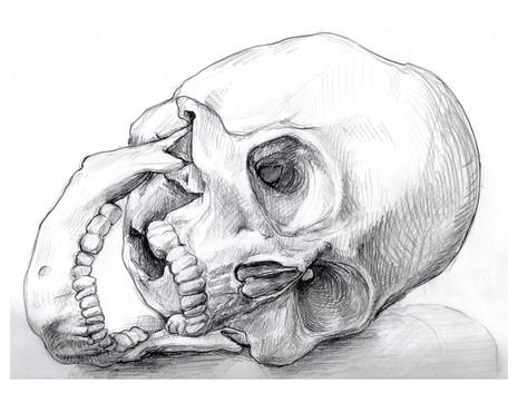 Skull gaping 1.jpg