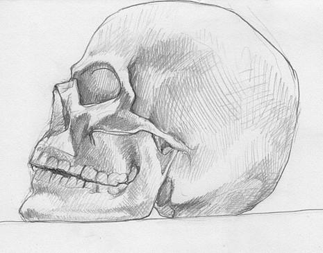 skull-sabrina-khan_edited.jpg
