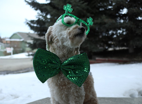 7 ST. PATRICK'S DAY PROMOTION IDEAS FOR YOUR KAMLOOPS BUSINESS
