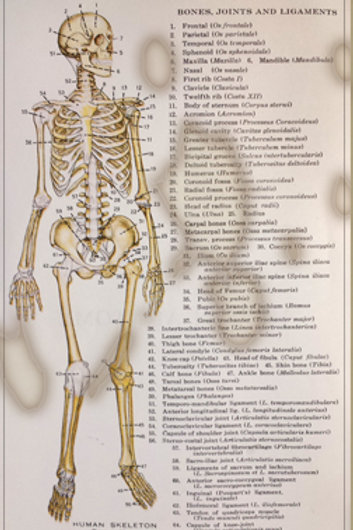 BONES JOINTS AND LIGAMATES MEDICAL CHART