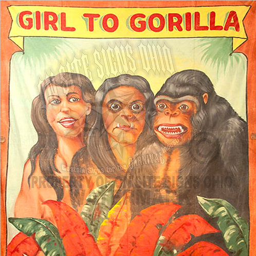 GIRL TO GORILLA