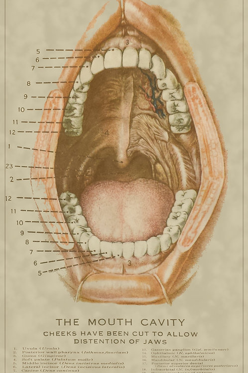TEETH AND MOUTH REGION MEDICAL CHART