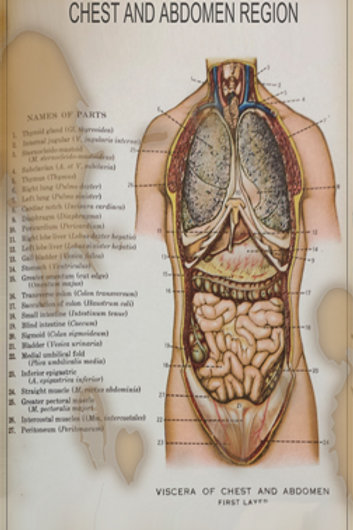 CHEST AND ABDOMEN MEDICAL CHART