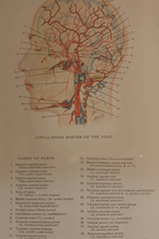 CIRCULATORY SYSTEM OF THE HEAD MEDICAL CHART
