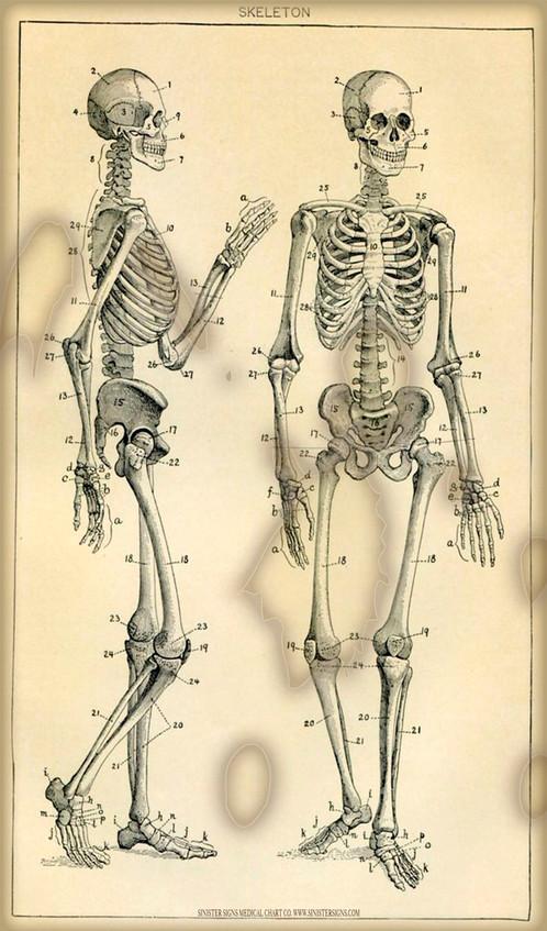 Double Skeleton Chart