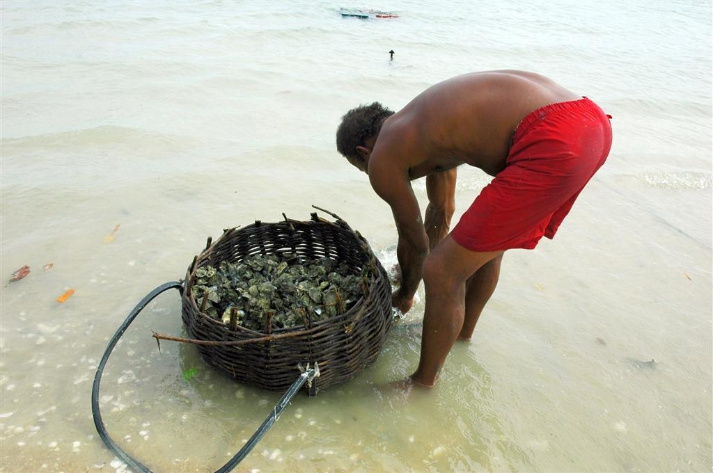 p-peixe-galo-ostras-foto-sergio-costa.jpg.1024x0