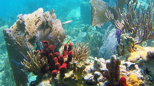 Waterlemon Reef St John