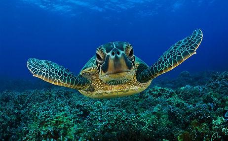 turtle-2-1.jpg