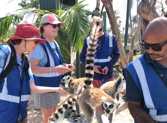 necker-lemurs-yay.jpg