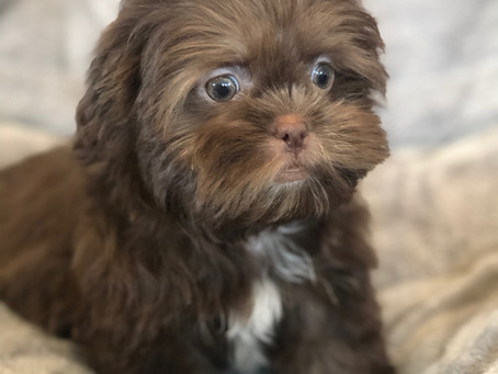 Exciting Fun Activities To Do With Your Puppy