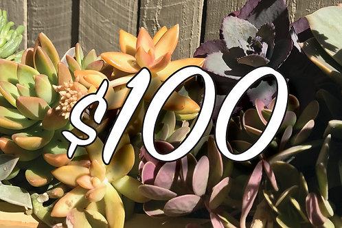 Bespoke Gift Voucher $100
