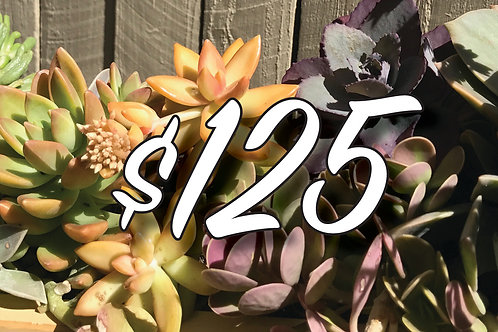 Bespoke Gift Voucher $125