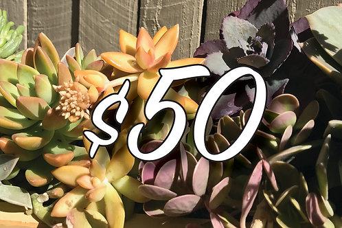 Bespoke Gift Voucher $50