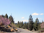Signs of Spring on Awbrey Butte in Bend Oregon
